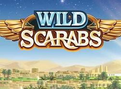 wild-scarabs-1